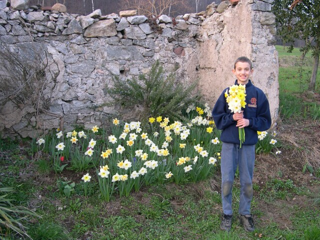 incocco-early-daffodils.jpg
