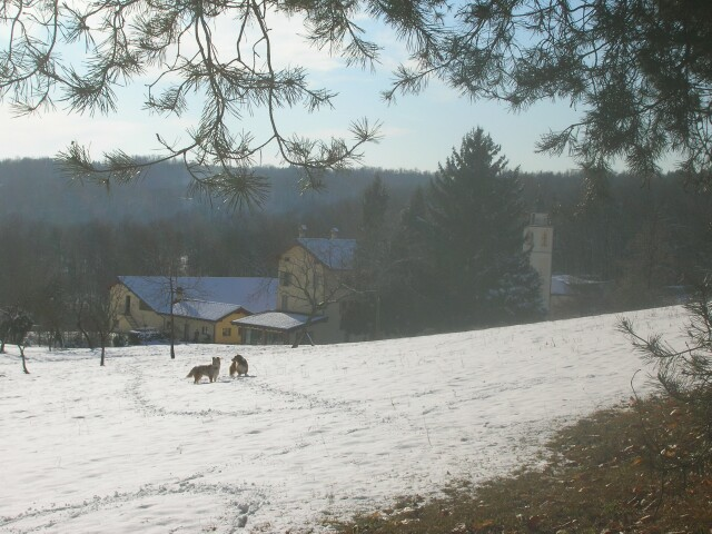 view-from-back-2009-snow.jpg