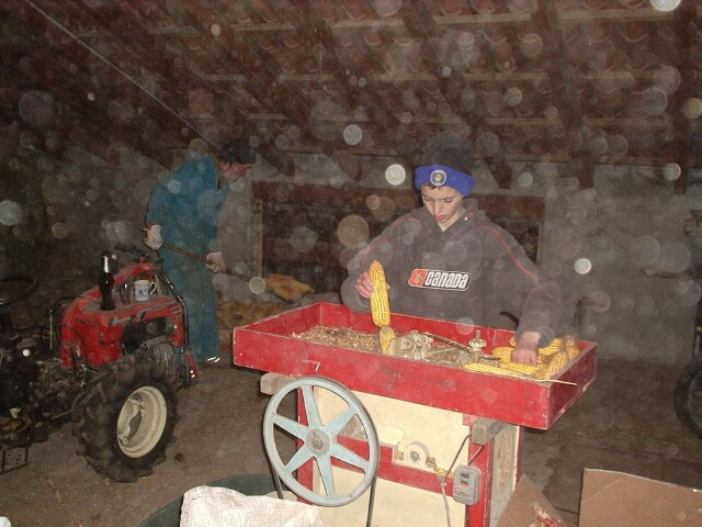 working-the-corn-harvest.jpg