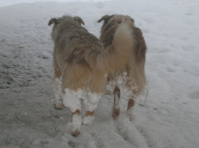 dogs-snowy-hind-ends.jpg