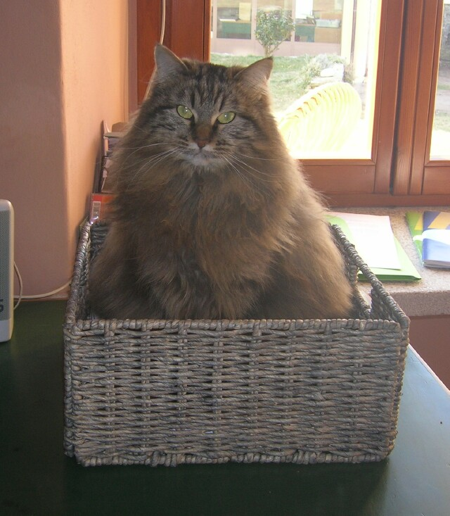 fluffy-in-basket.jpg
