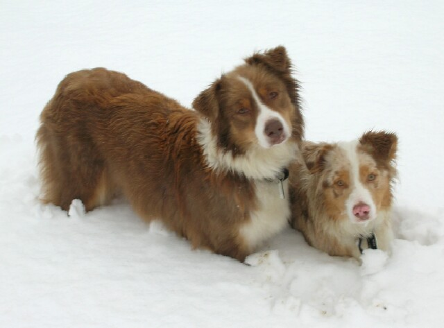 ginger-and-rosy-in-the-snow.jpg