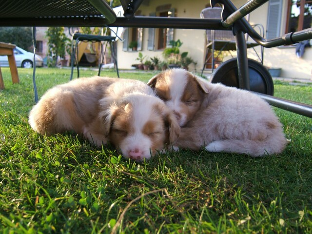 puppies-asleep.jpg