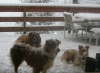 dogs-in-snow-on-terrace.jpg