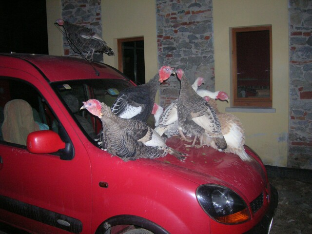 renault-turkeys3